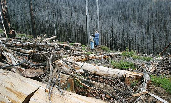 Kathie Durbin in the logged Babyfoot Lake Botanical Area