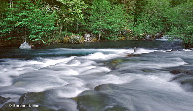 Baldface Creek flows into the National Wild and Scenic North Fork Smith River in Oregon.
