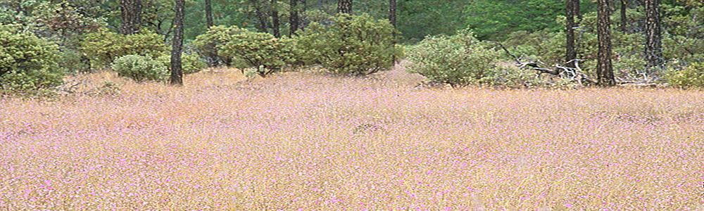 Eight Dollar Mountain Botanical Area - Kalmiopsis Rivers
