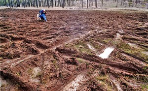 """Damage to Days Gulch Botanical Area from what's called """"mudding."""""""
