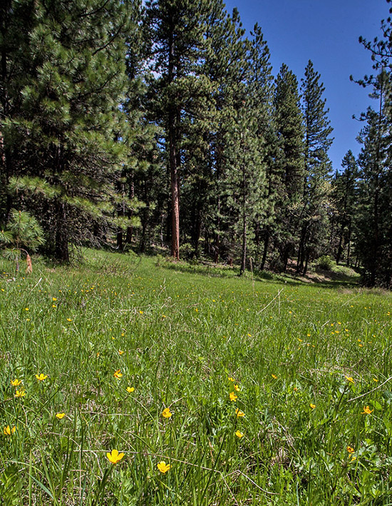 A wet meadow slated for road construction (Steven Johnson photo).