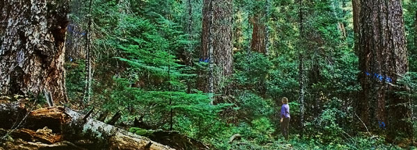 The Shasta Costa Watershed is a bridge between the Kalmiopsis Wildlands and the Wild Rogue