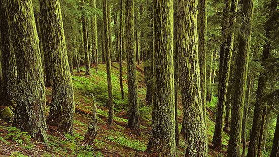 About 40% of the watershed burned in the 1930's, resulting in natural younger stands.