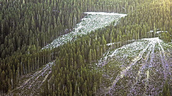Past logging left deep skid trails on steep slopes.