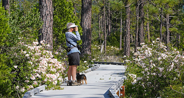 The Eight Dollar Mountain Botanical Area and Area of Critical Environmental Concern are not protected from mining (Barbara Ullian photo)
