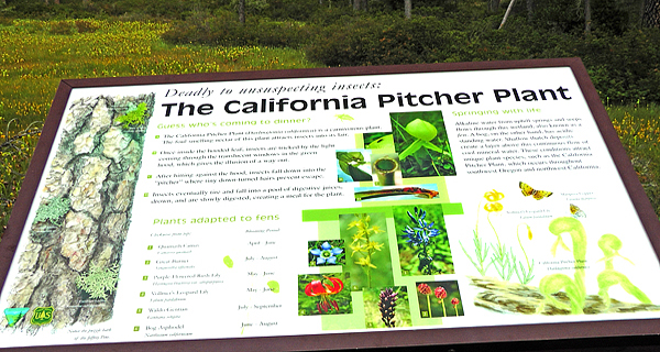 Interpretive sign at BLM Darlingtonia Boardwalk