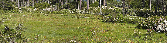 The Darlingtonia fens at the Eight Dollar Mountain Area of Critical Environmental Concern.