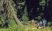 Expanding protection for Oregon Caves National Monument